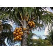 Базовое масло Пальмовое, рафинированное 80гр