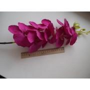 Орхидея на ветке фиолетовая
