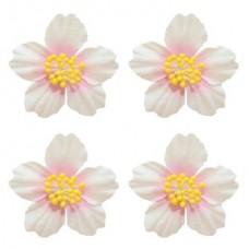 Цветы франжепани, 4 шт, белый с розовым