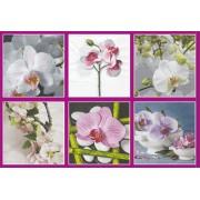 Салфетки бумажные Love2Art АССОРТИ 3х слойные SDD 33х33 см набор №52 Орхидеи