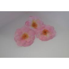 Цветок сливы розовый