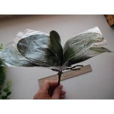 Листья орхидеи фаленопсис с корнями