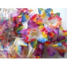 Орхидея Каттлея радужная 7см