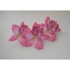 Орхидея Каттлея розовая 7см