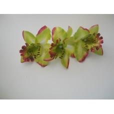 Орхидея Каттлея зеленая 7см
