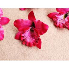 Орхидея Каттлея сливовая 7см