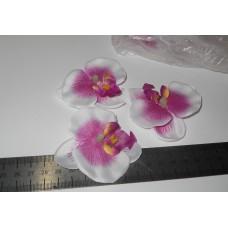 Орхидея белая с фиолетовой серединой