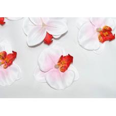 Орхидея белая  с красной серединой