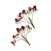 Орхидеи, набор 10 шт БЕЛЫЕ С БОРДОВЫМ