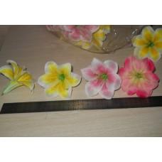 Лилия в ассортименте светло-розовая